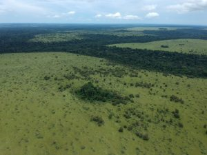 HCV Africa - Forest Patches